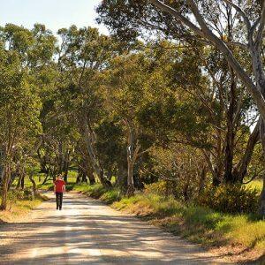 Lifeflow-meditation-mindfulness-Adelaide-retreat-Tara-Hills-summer-country-road-walking-02-800x500